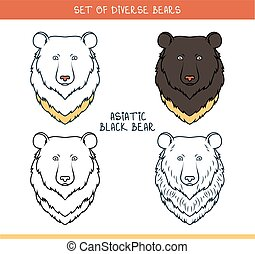 Asiatic black bear. Set isolated face, heads bear in color -...