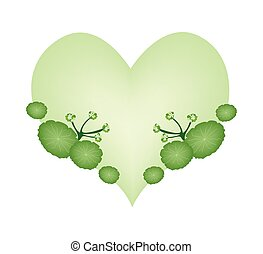 Asiatic Pennywort Plants in A Heart Shape - Love Concept,...