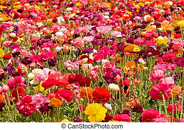 Fresh spring flowers in vivid blooming colors and sizes