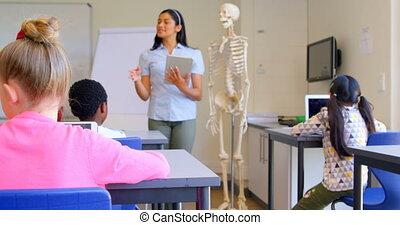 asiatique, classe, sur, femme, squelette, modèle, expliquer,...