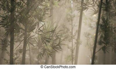 asiatique, temps, forêt, matin, bambou, brouillard