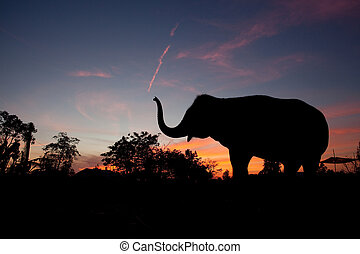asiatischer elefant, an, sonnenuntergang