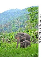 asie, éléphant, mère bébé, dans, forêt, de, asie sud-est