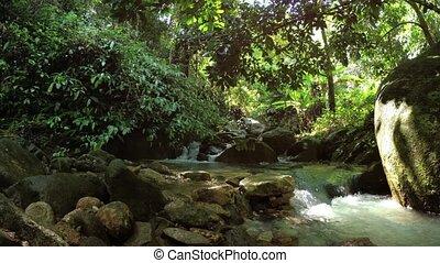 asie, jungles, petit, ruisseau, exotique, chutes d'eau