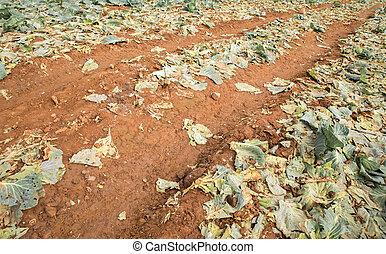 asignación de ruta, con, col, granja, después, harvesting.