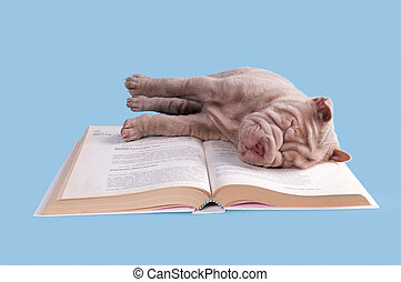 asleep puppy - little puppy asleep on top of a book while...