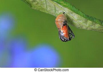 asombroso, momento, sobre, mariposa