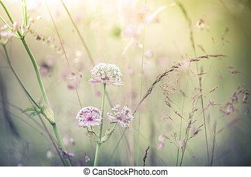 asombroso, salida del sol, en, verano, pradera, con, wildflowers., resumen, flor