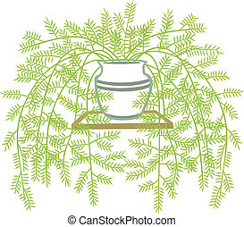 Asparagus Fern - stylized vector illustration of a...