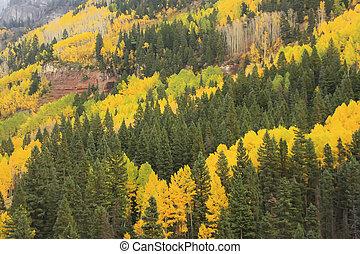 aspen, árvores, com, cor queda, san juan, floresta nacional, colorado
