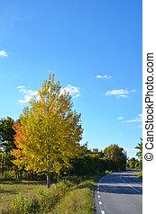 Aspen autumn colors