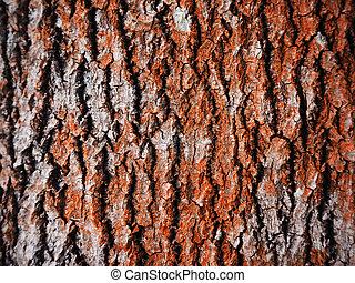 aspen bark. background