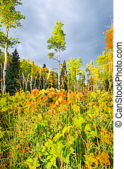 Aspen Forest in New Mexico