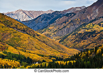 Aspen Forests Above Ouray, Colorado - The aspen forests...