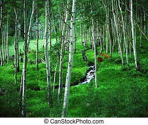 Classic Rocky Mountain scene in spring. Aspen Grove and Ranch with spring creek, Maroon Bells Wilderness Area, Colorado. Great for nature, wilderness, adventure, exploration, travel, tourism, backcountry and outdoor recreation themes.