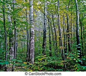 Aspen grove.