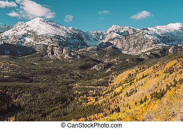 Aspen grove at autumn. Rocky Mountain National Park. Colorado, USA.