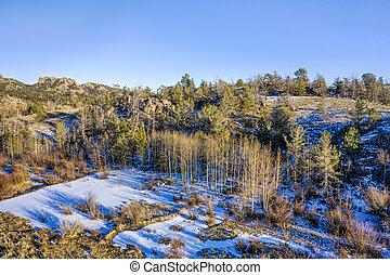 aspen grove in winter scenery, aerial view of Vedauwoo Recreational Area in Wyoming
