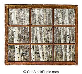aspen grove in winter window view