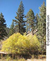 Aspen Grove Trail, Angelus Oaks, CA