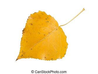 Macro of aspen leaf isolated on white