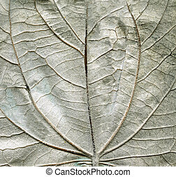 Aspen leave backside texture