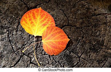 Aspen Leaves orange yellow gold