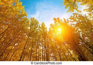 aspen, træer, ind, efterår, årstider