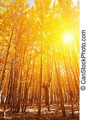 aspen, træer, ind, fald, årstider