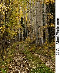 Small trail leading into an aspen forest near Telluride, Colorado