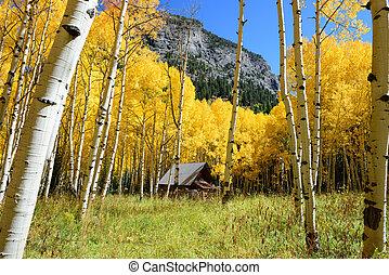 Aspen tree Fall foliage color in Colorado