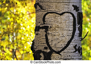 Aspen Tree Heart - Aspen tree love heart carved into tree ...