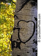 Aspen Tree Heart