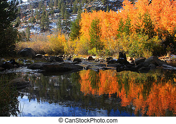 Aspen tree reflections - Bright aspen tree reflections in ...