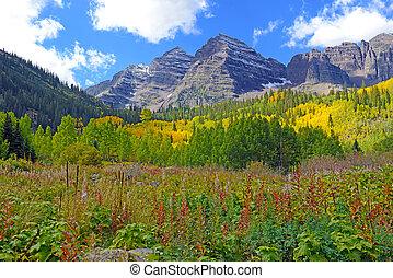 Aspen Trees in Autumn colors