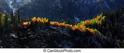 Aspen trees on mountain tops