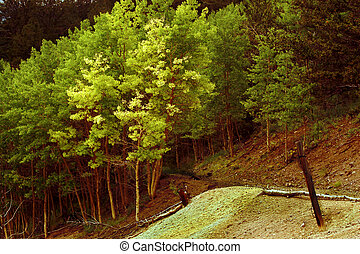 Aspens by the road - A stand of aspens on the road to an...
