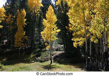 aspens, en, pijnbomen