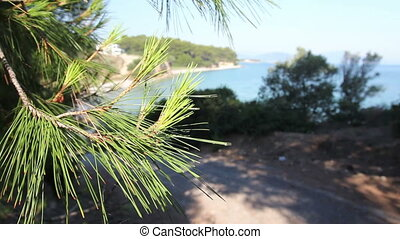 Asphalt going trough green vegetation, pine tree - Way...