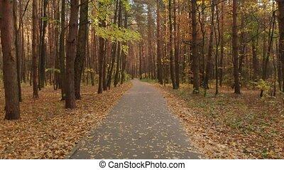 Asphalt path in the autumn deciduous forest - Autumn...