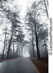 asphalt road in a misty forest with tall pine trees