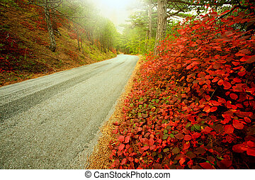 Asphalt road in autumn forest, in the light of warm rays morning sun