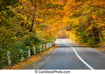 Asphalt road in golden autumn forest.