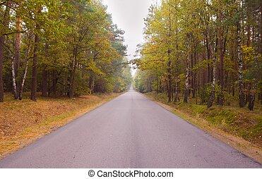 Asphalt road in landscape