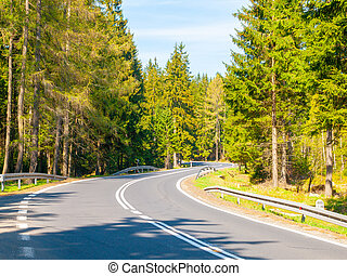 Asphalt road in the green coniferous forest on sunny summer day