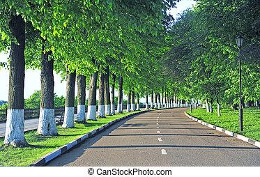 Asphalt road in the summer park