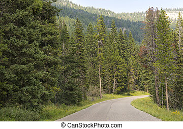 asphalt road in Yellowstone National Park