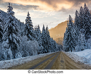 asphalt road through spruce forest at sunset. gorgeous...
