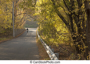 Asphalt road through the autumn forest