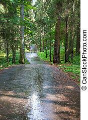 Asphalt road through the forest after rain